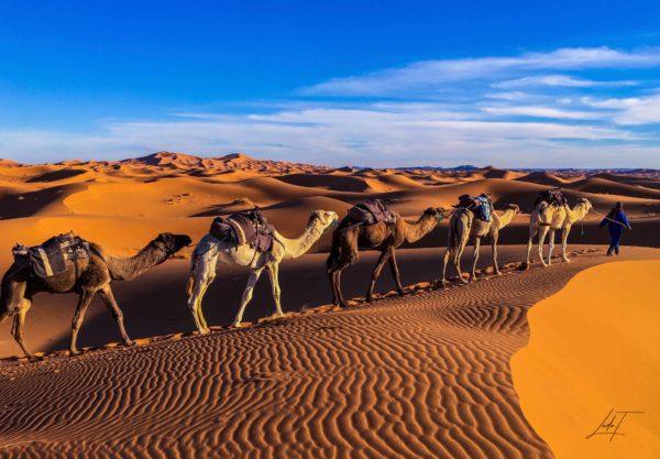 Photo de la caravane qui passe dans le désert